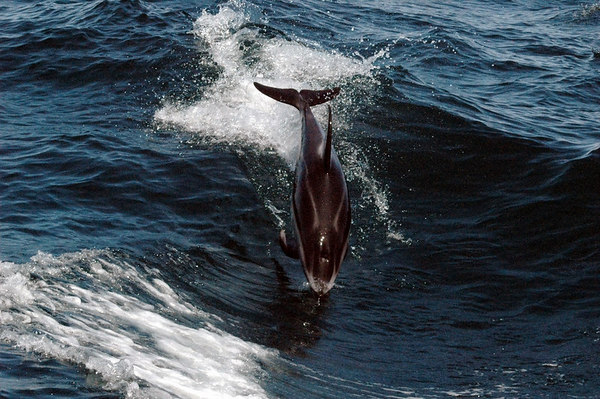 Dolphins, Seals, Sea Otters, Orcas, and Humpback Whales