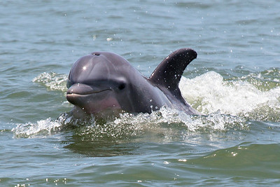 Dolphins and More: July 12, 2014