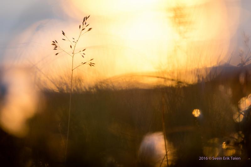 Fragile against the light