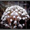 """Tromsoe palmtree""  with the first snow II<br /> Bodø"