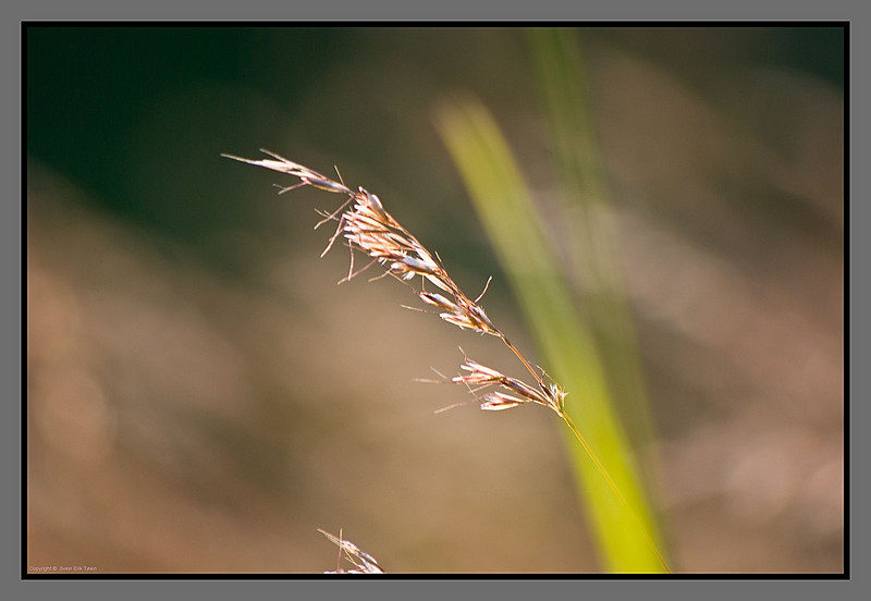 Straw in the wind II