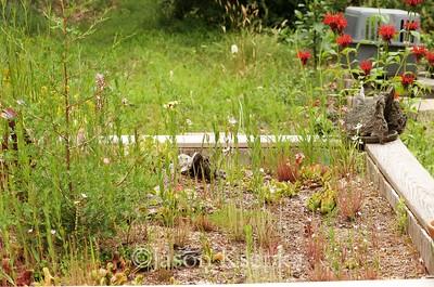 Bog garden; Farmingdale, New Jersey  2017-07-06   45