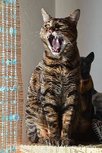 Lola expresses her excitement about the cat figurines, March 2015