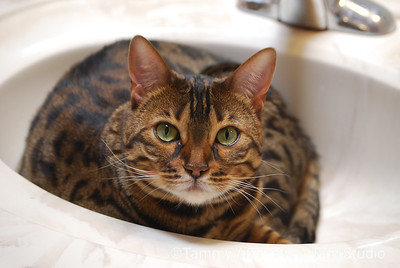 Lola in the sink, June 2011