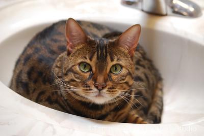 Lola in the sink, June 2011