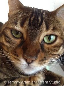Lola close-up, Oct. 2012