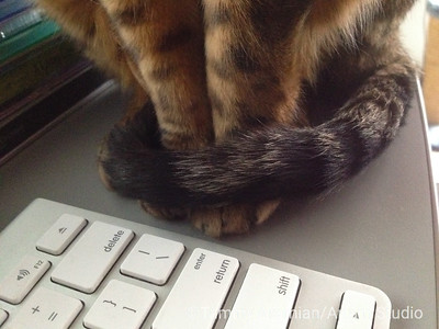 Paws and tail waiting, Dec. 2014
