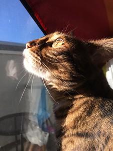Lola, Apr. 2018