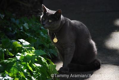 Smokey, March 2010