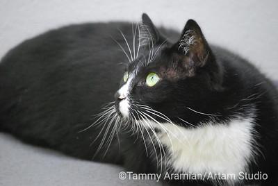 Cookie pensive, Apr. 2010