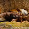 Tulsa Zoo w R Andes