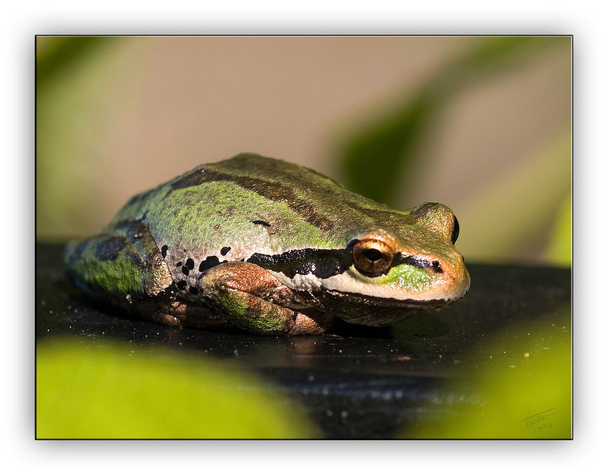 frog6375
