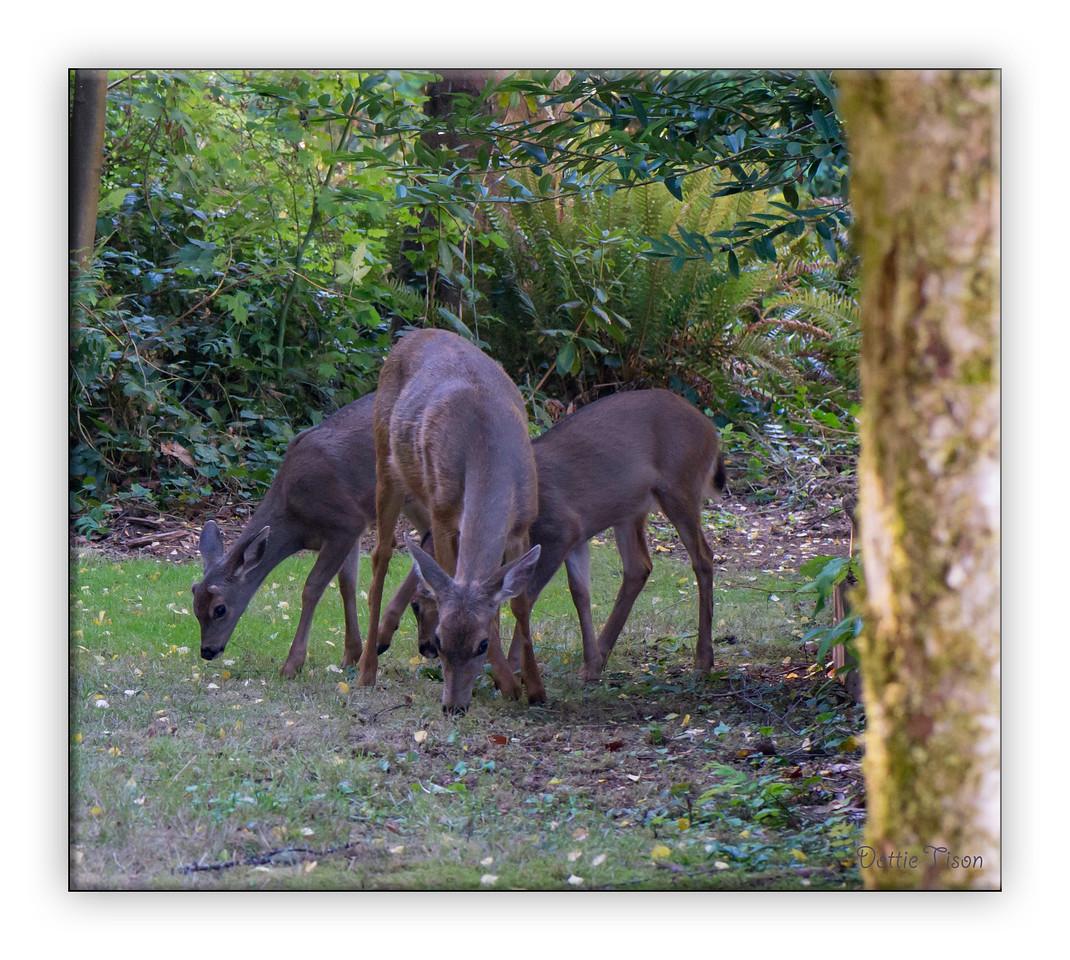 deer7482