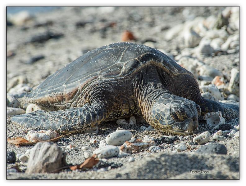 turtle3545