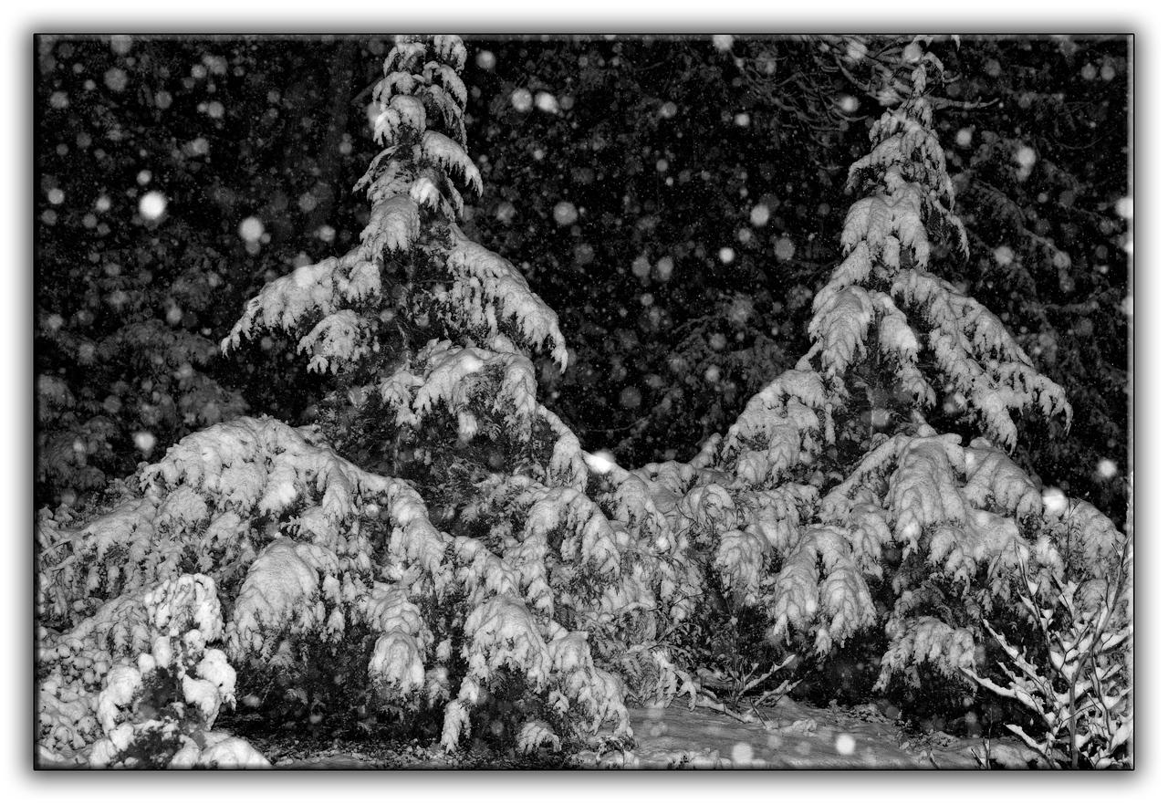 snow1460