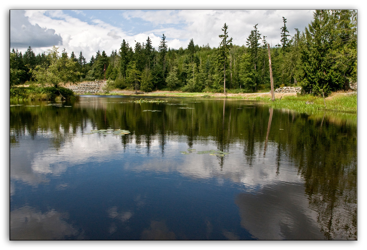 pond1341