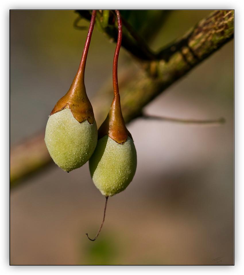 seeds6153