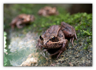 frogs9798