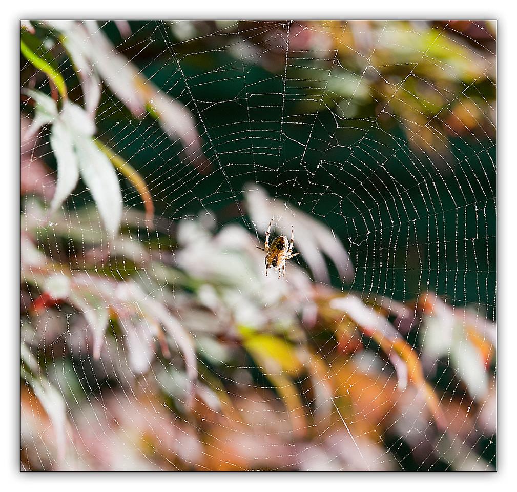 spider9141