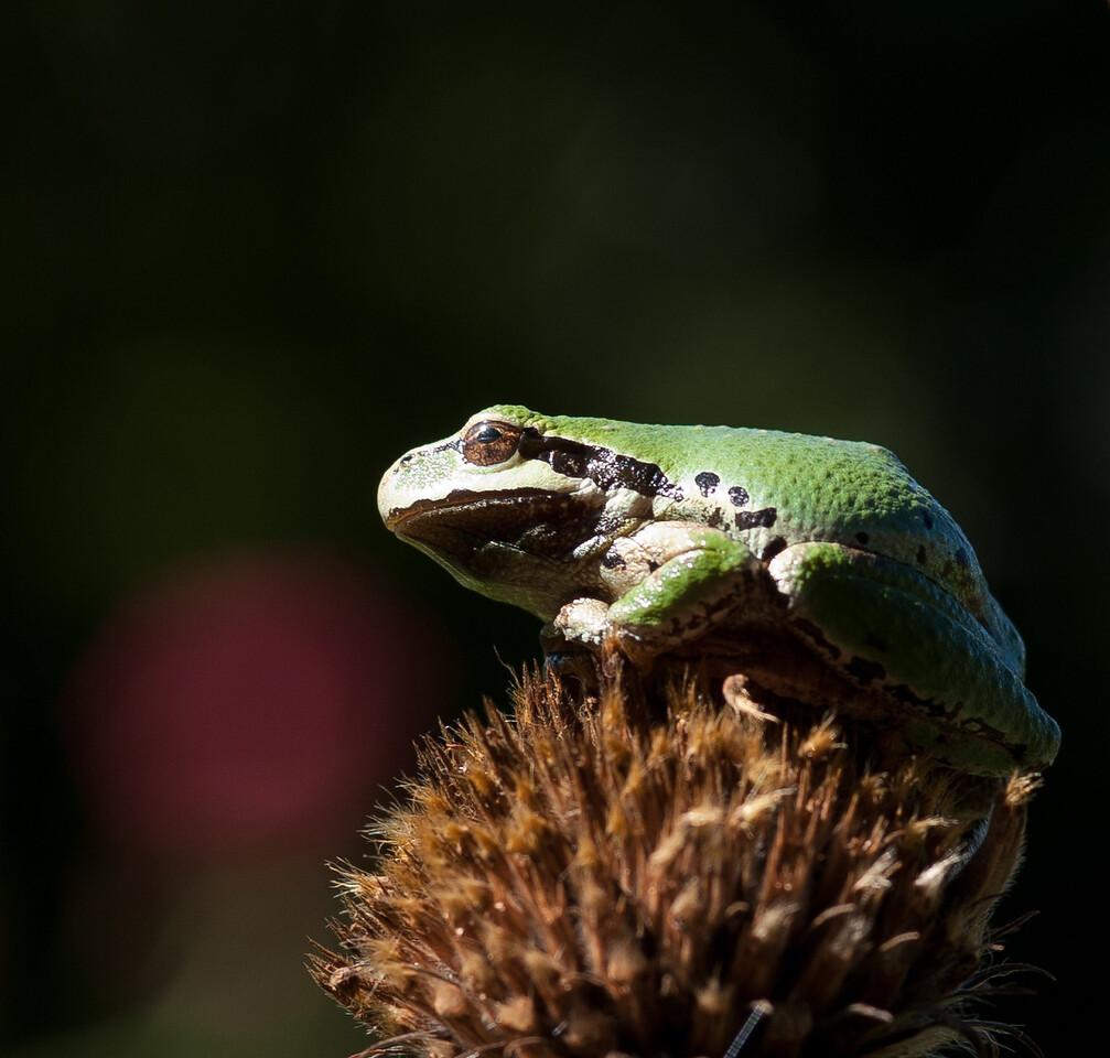 frog-1708