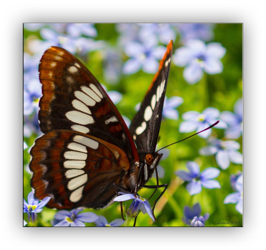butterfly0225