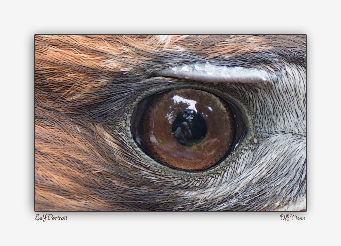 In the eye of the Hawk