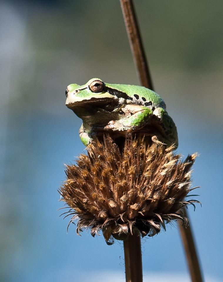 frog-1702