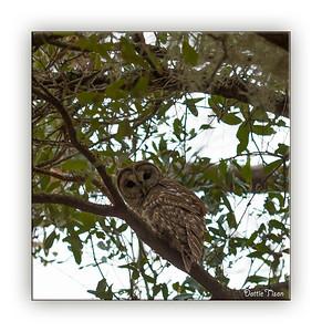 OWL3500-Edit