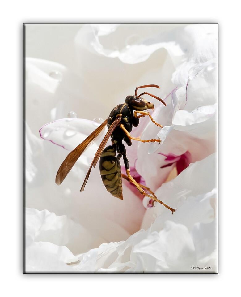 wasp2065