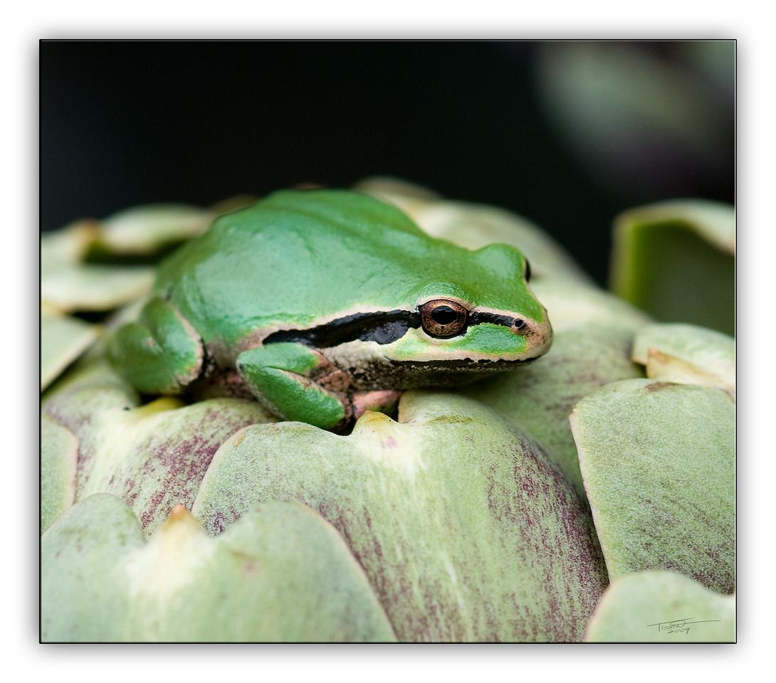 frog6309