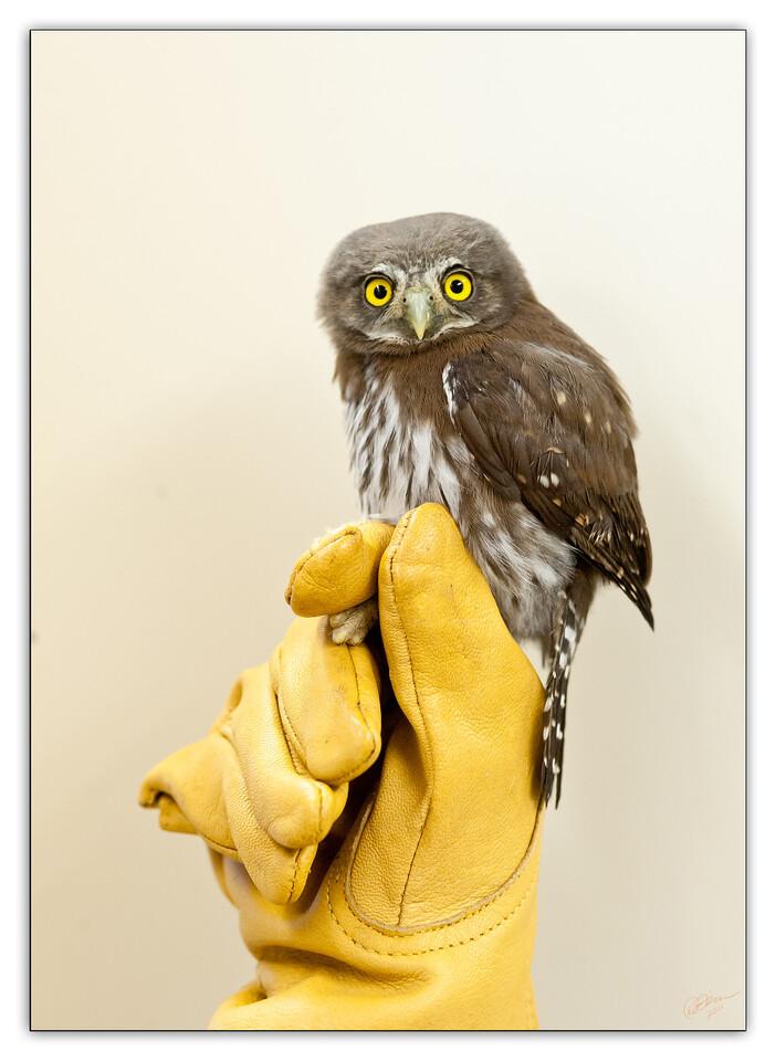 powl9526
