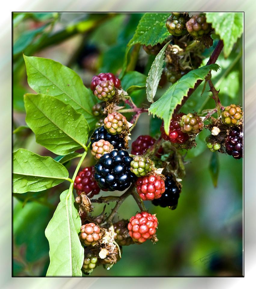 berries6348