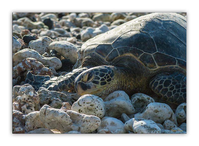 turtle2828