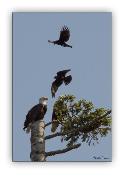 EagleCrow6443