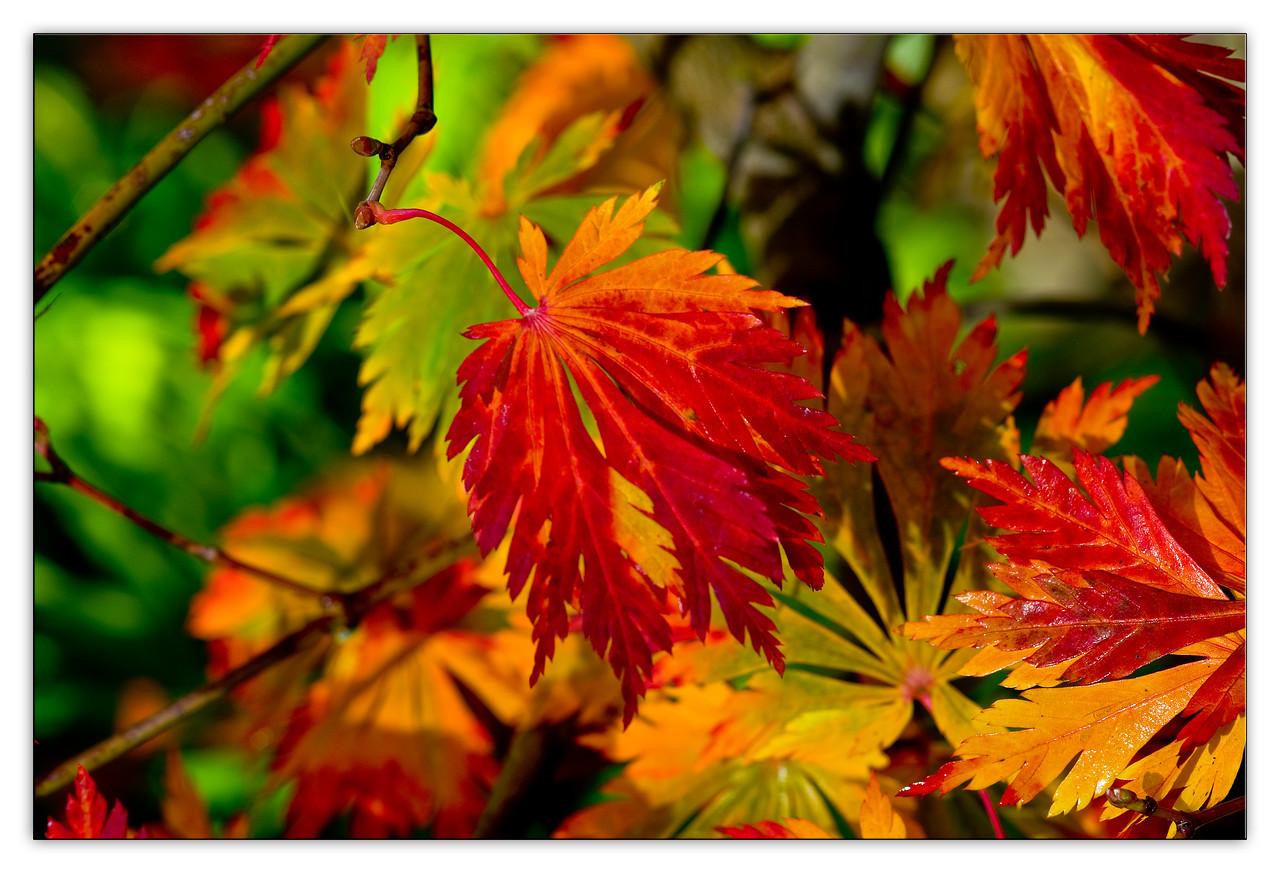 fallcolor7191