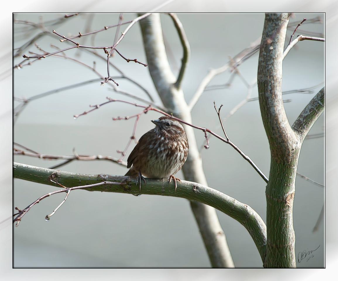 bird4266