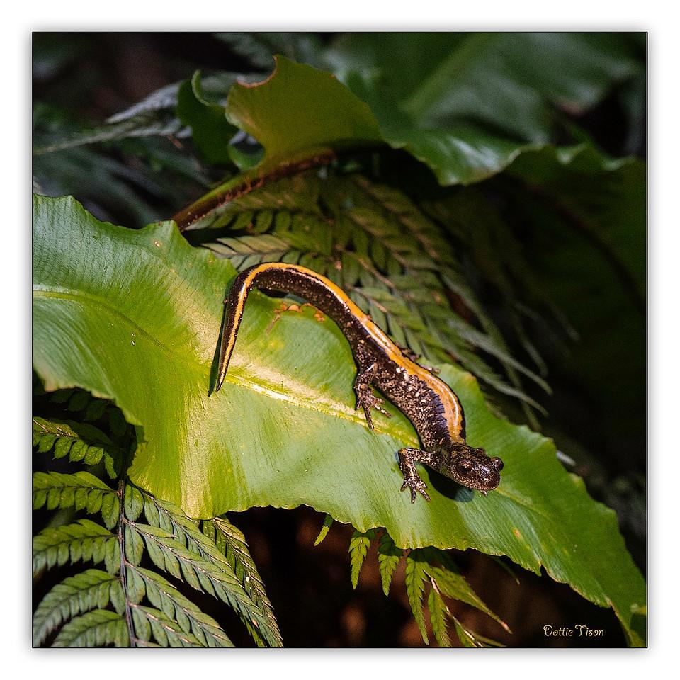 Salamander8964