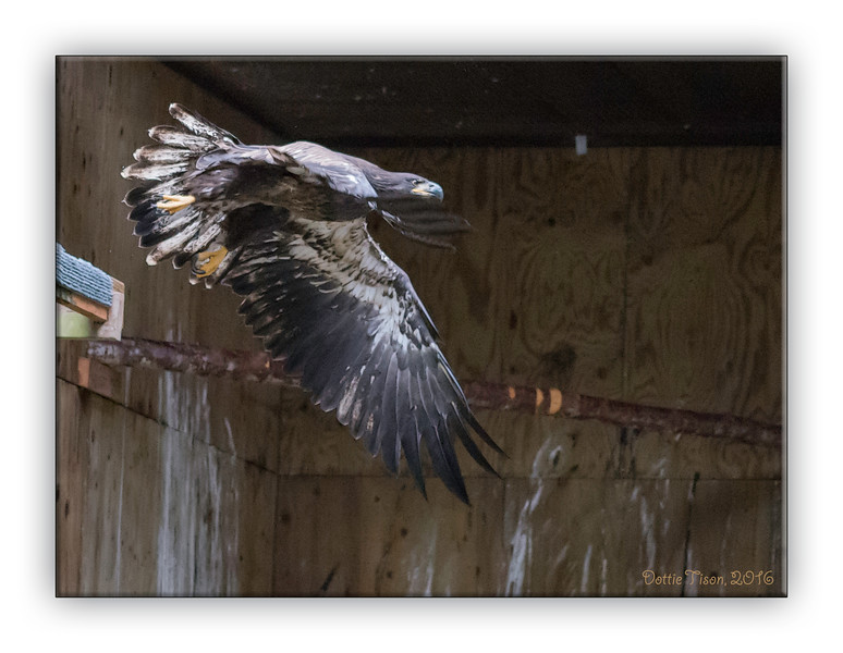 Eagle9718