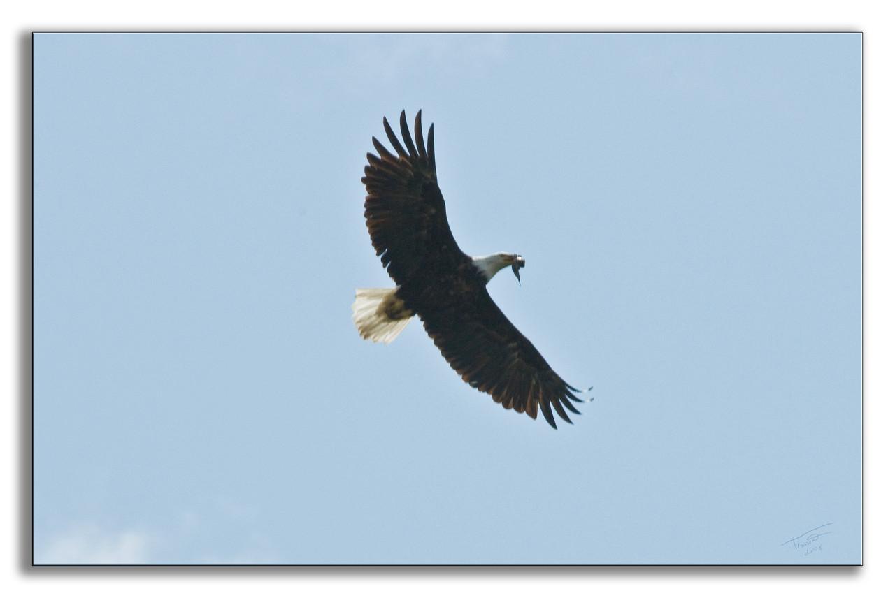 eagle0345