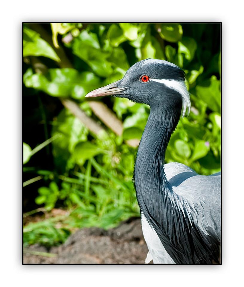 crane3059