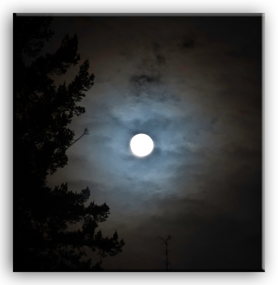 moon5337