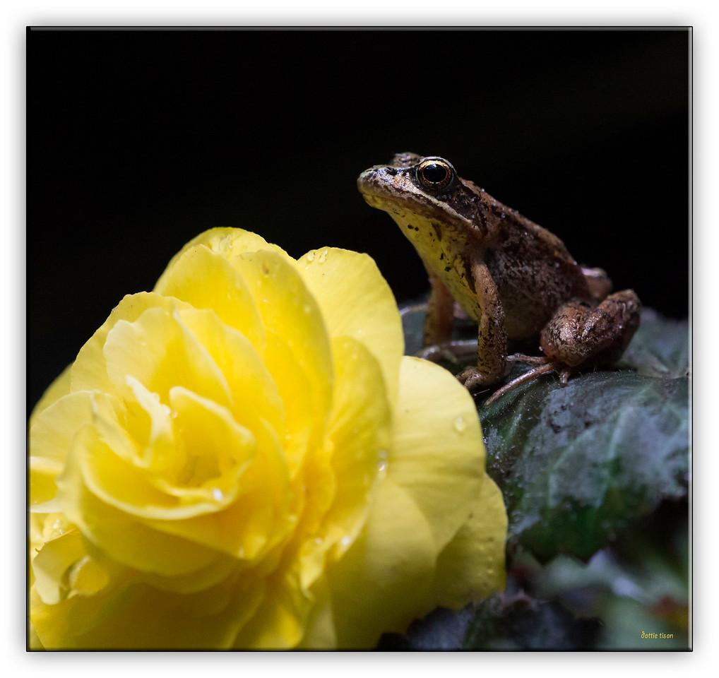 The frog's flower