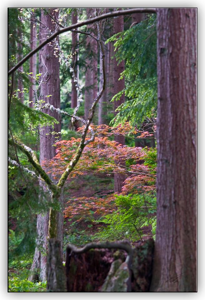 trees0837