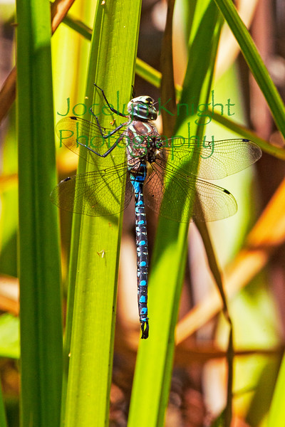 DragonFly8722