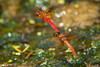 DragonflyLove6078