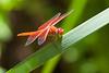 Dragonfly5054
