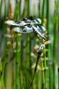 Dragonfly5996
