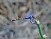 Seaside Dragonlet