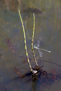 Dragonfly (Parc Slip).
