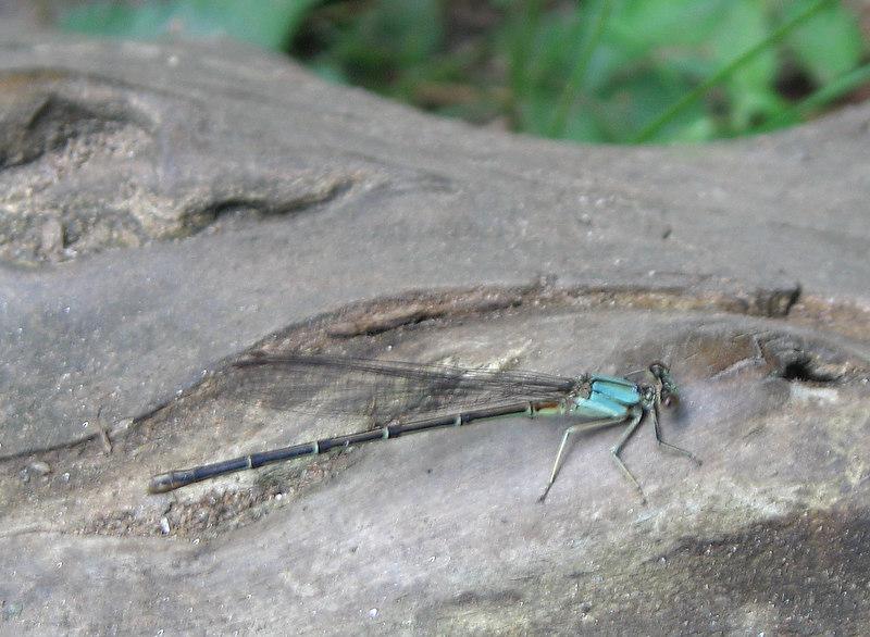 Dragonfly near James River, Richmond, VA